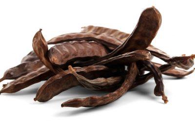 Caroube Chien : le plaisir chocolaté autorisé pour les poilus